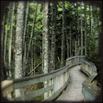 Bay of Fundy Boardwalk