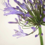 A Delicate Touch - floral photography