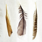 Five Feathers