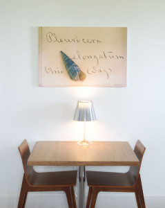Modern Photography of Natural History Shell in Boutique Hotel Room