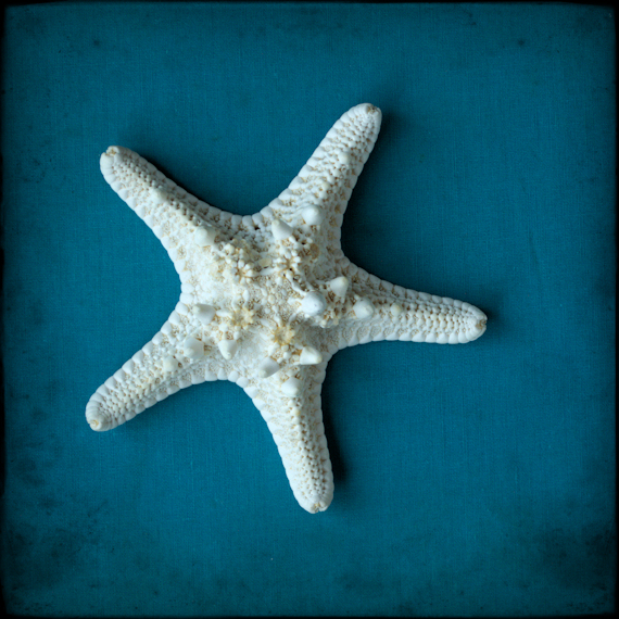 Sea Star on Blue - Starfish Art