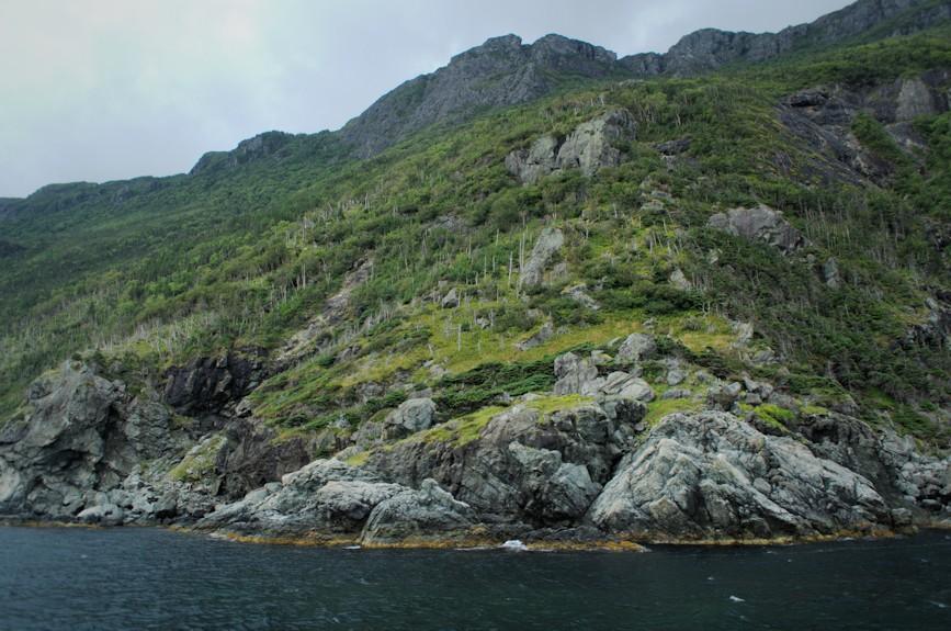 Bonne Bay Coast